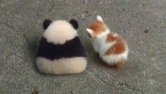 No talk with panda and kitty they angy Cute Funny Animals, Cute Baby Animals, Funny Cute, Animals And Pets, Cute Cats, Panda Love, Cute Panda, Cat Love, Animal Pictures