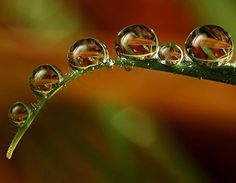 Tiny Dewdrops On Flowers By Alistair Campbell IV L Mothernature - Amazing images captured tinniest water droplets