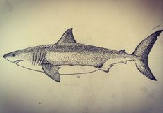 Great white shark  Fineliner on paper  dotwork, pointillism, tattoo, drawing