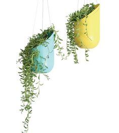 Pots de fleurs en bleu et jaune