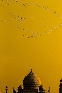 Yellow | India