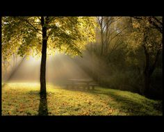 Photograph Light in the forest by Péter Koczkás on 500px