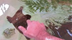 OMG how cute is this wiggly little platypus?!?!