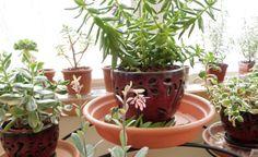 fun pots, easy arrangement