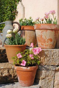 Italian Terracotta Standard Pot Hands down our best selling flowerpot. We call this terra cotta pot