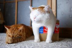 小さい箱とシロ