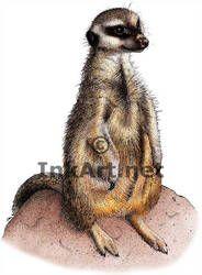 Meerkat #2 Custom Italian Charm Kalahari Meercat CUTE!
