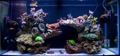 55 Gallon Live Rock Aquascape | Pictures of just your liverock aquascaping...for a SPS tank