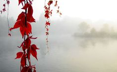 Red vines above the foggy lake HD Wallpaper