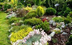 Houseplants, Garden Plants, Perennials, Grass, Patio, Flowers, Outdoor, Design, Google