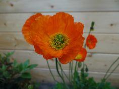 Mooie bloemen uit mijn tuin