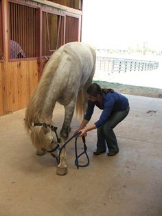 Exercises to Strengthen Equine Back Muscles, Reduce Pain