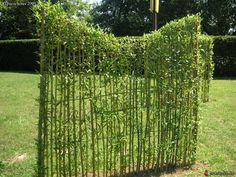 Clôture végétale en saule tressé Living Fence, Tropical Garden, Trellis, Botanical Gardens, Garden Landscaping, Beautiful Flowers, Grass, Planters, Backyard