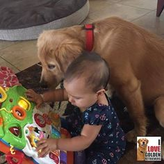 This baby and her puppy have to put a smile on your face! | I Love Golden Retrievers