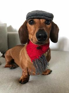 My sister spends a lot of money on outfits for her dog. This is part of the Fall Collection