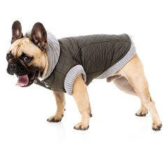 French Bulldog, Batpig & Me Tumble It