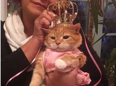 Lavish Quinceañera Thrown for Beloved Cat, 15