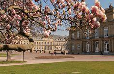 Frühling am Stuttgarter Schlossplatz