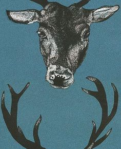 Stag Head Teal wallpaper by Graduate Collection