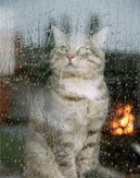 Keep Your Cat Calm During Storms