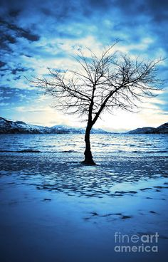 The Lonely Tree Photograph  - The Lonely Tree Fine Art Print by Tara Turner