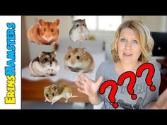 WHAT HAMSTER SPECIES IS IT? - YouTube