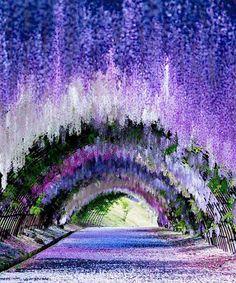 Kiwachi Fuji Garden in Japan