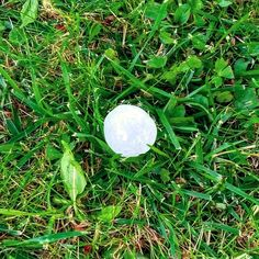 'Hail Mail' August 24 2016  der Hagel hail  das Hagelkorn (sgl) die Hagelkörner (pl) hailstone(s)  A couple of days ago there was a really strong hail storm while we were having a BBQ. Those hailstones had a diametral of 2cm to say the least... really crazy!  I already uploaded the next VlogDave video because I'm gonna be celebrating my birthday (which was around 2 months ago :D) tomorrow! :) Check out today's German lesson about how to determine German articles with the help of suffixes…