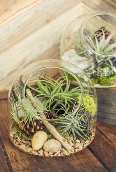 This little terrarium is ready for you to make your own little biome within. Charming filled with ferns and moss, decidedly modern with succulents and airplants. 6x6x5.5in.