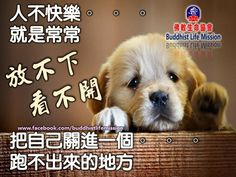 静思语 Dogs, Life, Animals, Animales, Animaux, Pet Dogs, Doggies, Animal, Animais
