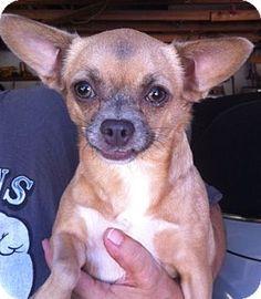 Camelia Adopt Me Rescue Phone: (818) 732-0733 E-mail: adoptmerescue@gmail.com Address: Studio City, CA 91602