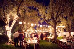 Paper Lanterns In Old Olive Trees Br Cohn Winery Wedding Sonoma Valley