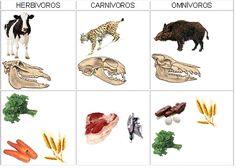 Un viaje por el conocimiento: HERBÍVOROS, CARNÍVOROS U OMNÍVOROS Rooster, Animals, Grandparents, Knowledge, Voyage, Animales, Animaux, Animal, Animais