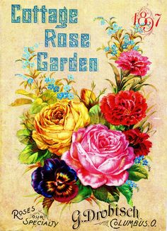 1897 Cottage Rose Vintage Flowers Seed Packet Catalogue Advertisement Poster  | Collectibles, Advertising, Merchandise & Memorabilia | eBay!