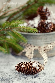 Pinecones with a dusting of snow