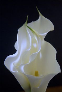 Calla Lilies…