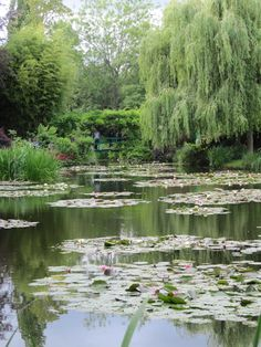 Monet's Giverny. Pond with water lilies, weeping willow. Lush landscape.