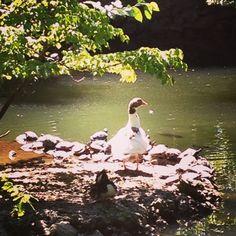 ducks and turtles