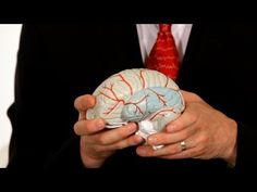 What's Temporal Lobe Epilepsy? | Epilepsy - YouTube ---> As far we know, this is the kind of epilepsy that affects Josh the most. Is it crazy that I learned more from this video than from his neuro?