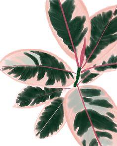 Ruby Rubber Plant – Best Garden Plants And Planting Hanging Plants, Indoor Plants, Indoor Gardening, Leafy Plants, Foliage Plants, Rare Plants, Cool Plants, Cactus Plants, Image Deco