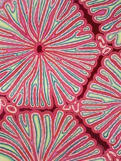"""""""Cellen"""" Dit is het laatste stukje van de serie de driedelige """"Scopes"""".  Dit is mijn interpretatie van levercellen.  Afgebeeld als dit ze eruit Sufi dansers van boven, helften van sinaasappelen, bloemen, veel van de gerecycleerde patronen die de natuur gebruikt in heel de schepping.  2000 Afmetingen: 90cm x 120cm Medium: Acryl op board"""