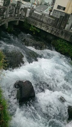 水がわくわくです!@三島神田川