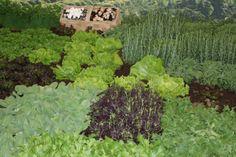 Jeden Freitag von 09.00 bis 15.00 Uhr findet der Villacher Bio-Bauernmarkt statt. Rund 20 Biobauern aus dem Alpen-Adria-Raum halten jeden Freitag ihren Markt am Hans-Gasser-Platz in Villach ab. Handwerklich hergestellte Bio-Lebensmittel, die so schmecken, wie sie heißen, nämlich nach dem puren Leben. Parsley, Herbs, Farmers Market, Villach, Friday, Alps, Foods, Round Round, Herb
