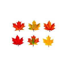 Trend Enterprises Classic Accents Variety Pack, Maple Leaves Great for introducing units, inspiring creative writing, building Alphabet lines, or as a fun alternative for note pads Create a world of wonder for students Ages 3 to 15 Maple Leaves, Autumn Leaves, Fall Classroom Decorations, Classroom Fun, Reunion Decorations, Projects For Kids, Craft Projects, Creating Games, Graphing Activities