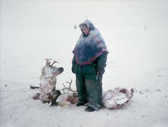 Erika Larsen    Sami    Gällivare, Sweden    NOVEMBER ISSUE    Sven Skaltje was saddened to find the carcasses of two female reindeer whose antlers had become entangled during a dominance struggle in northern Sweden. He estimates it took three days for them to die of starvation. After separating the bodies, he saw from the ear markings that one belonged to him and the other to his cousin. Skaltje is much admired by the younger Sami in his herding group, but he is unsure whether the skills he…