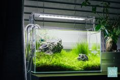 Our nightstand planted aquarium more matured. Aquatic plants are green, lush and recently trimmed. Nano Aquarium, Nature Aquarium, Planted Aquarium, Aquatic Plants, Fish Tank, Perfect Place, Underwater, Lush, Nightstand