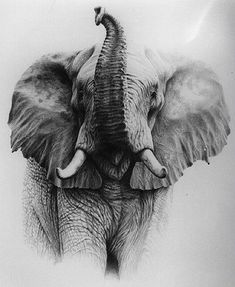 Elefante de trompa arriba. Good drawing of elephant with its trunk up.