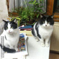 Lilli und Teddi: Bei der Kälte bleiben wir lieber drinnen! #cats #cat #winter