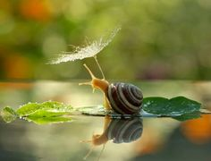 Улитка с зонтиком и другие макро-фото Вячеслава Мищенко - Хорошие новости про животных