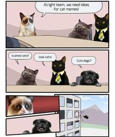 Oh no!  Poor little pug!